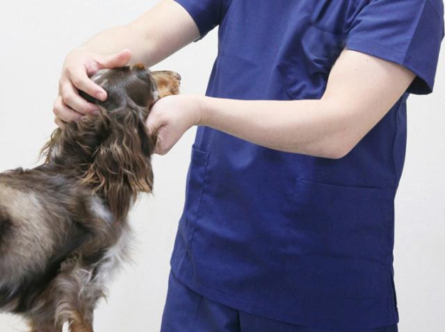 動物と触れ合える仕事を目指す人のための通信制高校・サポート校はあるの?
